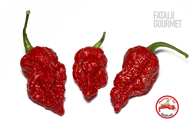 guide to growing chili peppers
