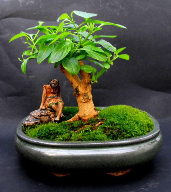 http://fatalii.net/rocopica_bonsai.jpg