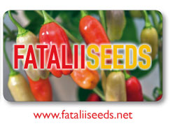 A large collection of the top quality chile pepper seeds here